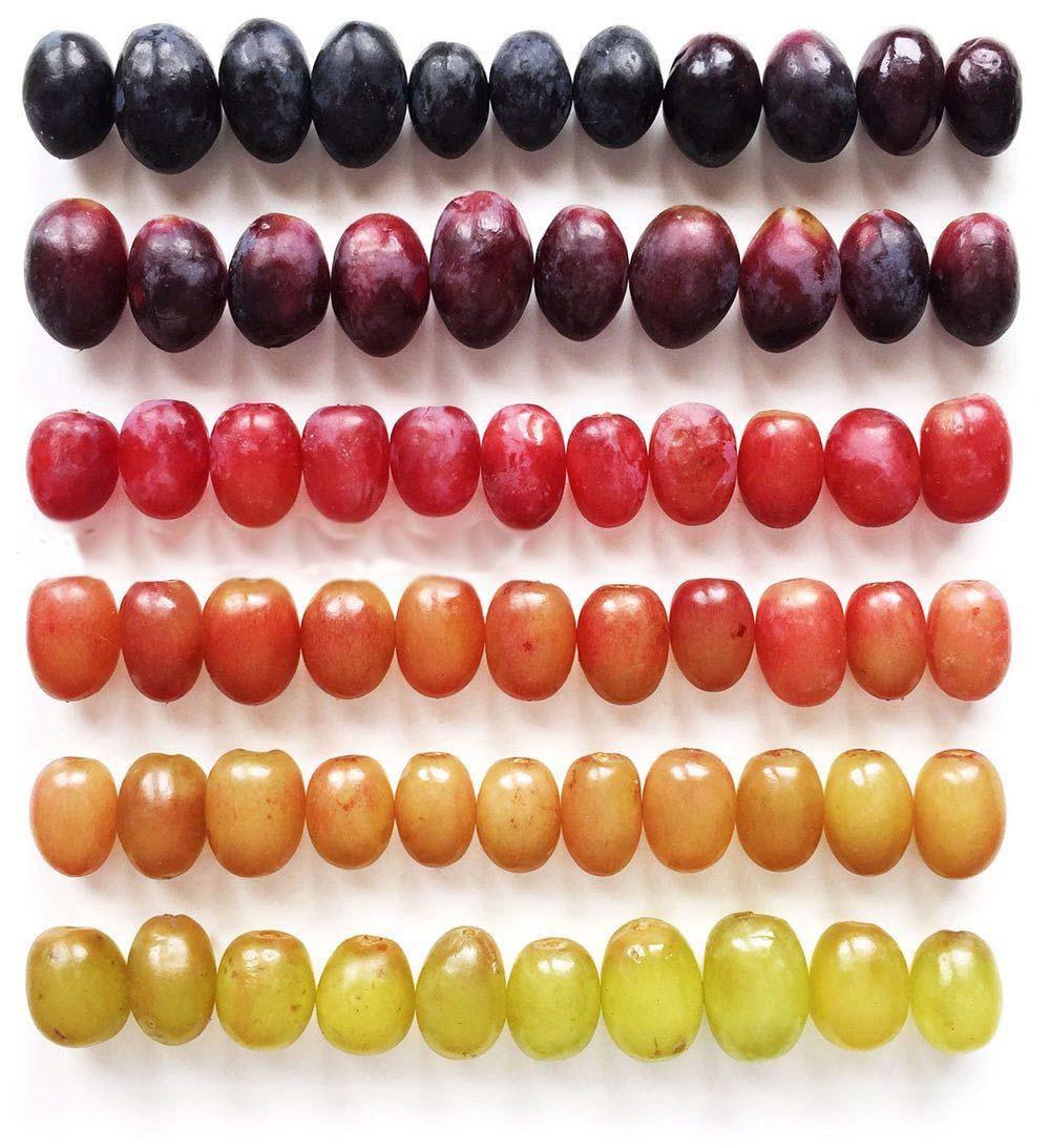 رنگهای انگور