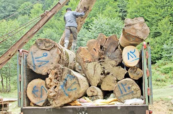 تداوم نگرانی برای جنگلهای هیرکانی