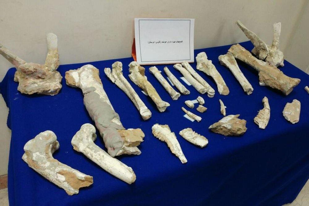 فسیلهای ۷ میلیون ساله لرستان رونمایی شد