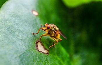 حشرات هم تحت تاثیرافزایش جهانی دما قرار گرفتند