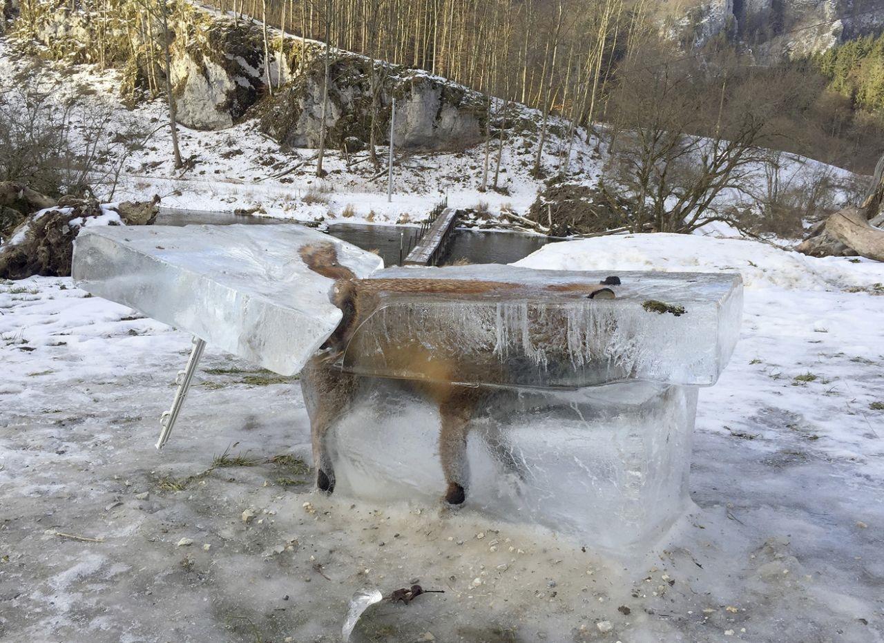 عکس روز: روباه در قالب یخ