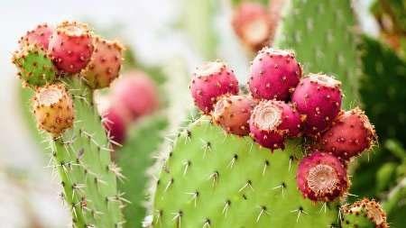 گیاهان مدیترانهای سلاح جدیدی برای مبارزه با آلزایمر و پارکینسون