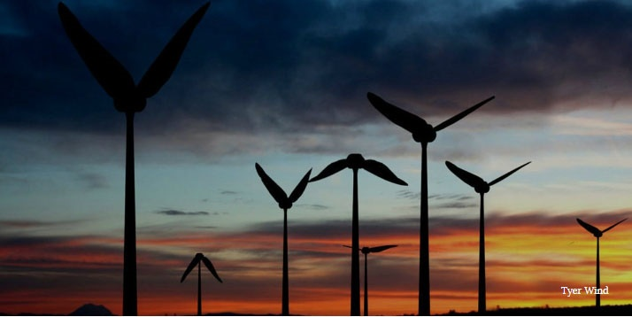 الهام از مرغ مگسخوار برای ساخت توربین بادی
