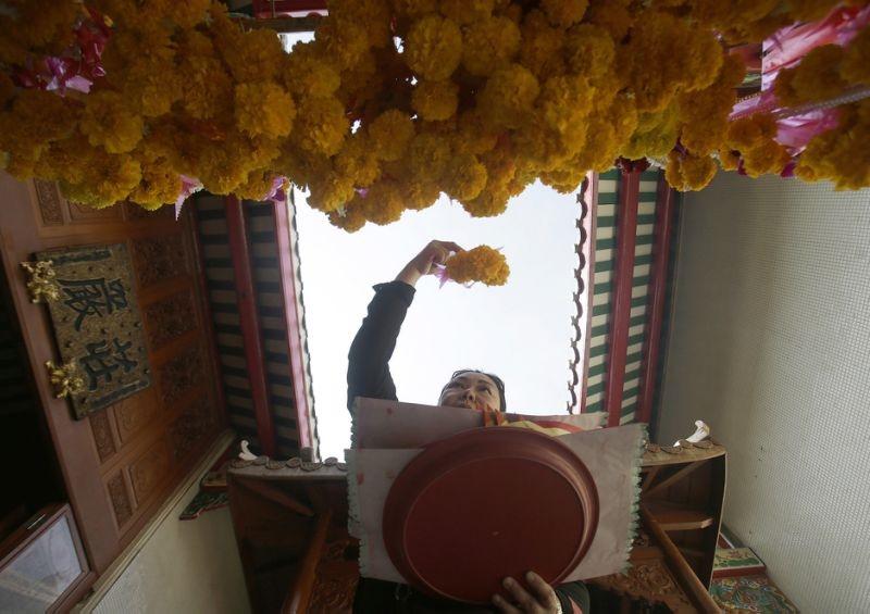عکس روز: گلهای زرد برای سال خروس