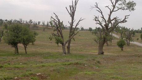 خشکیدگی، جنگلهای بلوط کهگیلویه و بویراحمد را تهدید میکند
