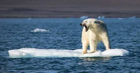 محیط زیست چگونه سال ۲۰۱۶ را پشت سر گذاشت