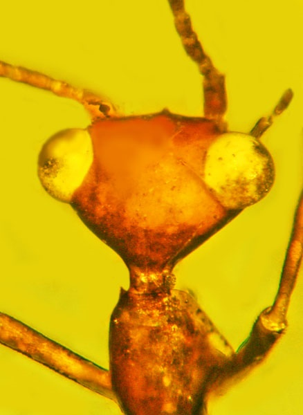 کشف موجود بیگانه ۱۰۰ میلیون ساله