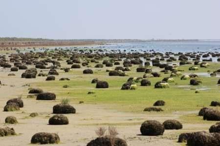 احیاء خلیج گرگان و تالاب میانکاله، اولویت سازمان محیط زیست