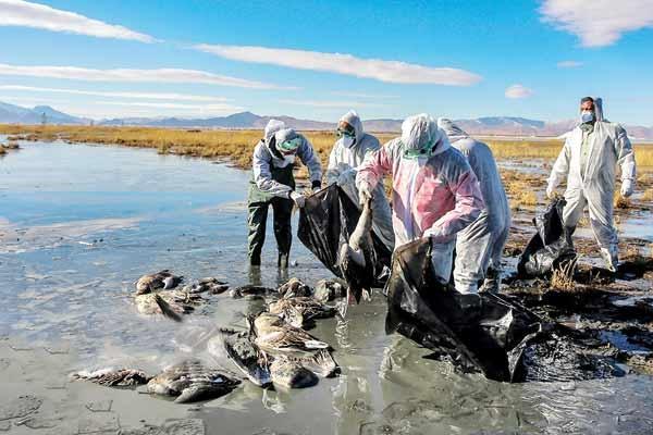 آلودگی به آنفلوآنزای فوق حاد پرندگان در ۱۲استان کشور
