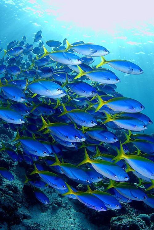 گرم شدن آب دریاها کوچ ماهیها را افزایش داده است