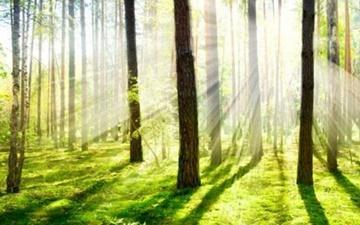 طبقهبندی درختان با اسکن لیزری