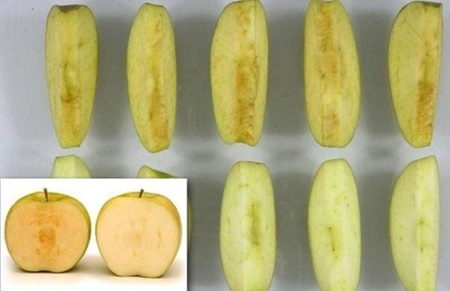 تولید سیبی که سیاه نمیشود