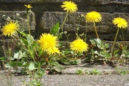 گیاهان خودشان را با زندگی شهری هماهنگ میکنند