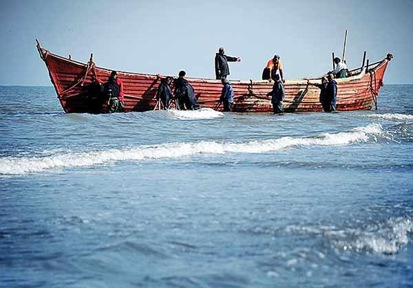 اشتهایچینیها، کوسههای ایرانی را نابود میکند