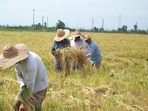 شرایط بازنشستگی بیمهشدگان روستایی در سال ۱۴۰۰