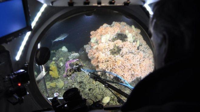 اقیانوسهای اسیدی تهدیدی برای حیات تمام آبزیان جهان