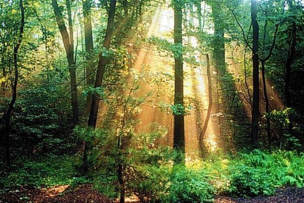 زندگی نزدیک درختان به سلامت مغز و کاهش استرس کمک میکند