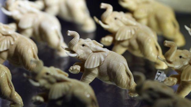 ثبت رکوردی جدید در قاچاق عاج و کشتار فیلها