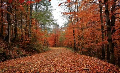 قدمزدن روی پاییز