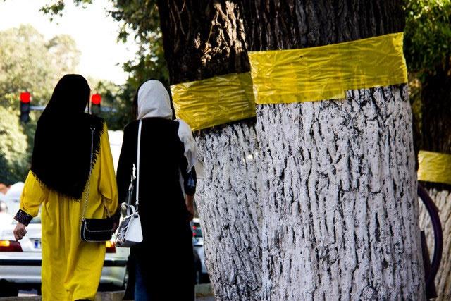 انتقاد یک گیاهشناس از تعویض نشدن چسبهای زردرنگ درختان تهران