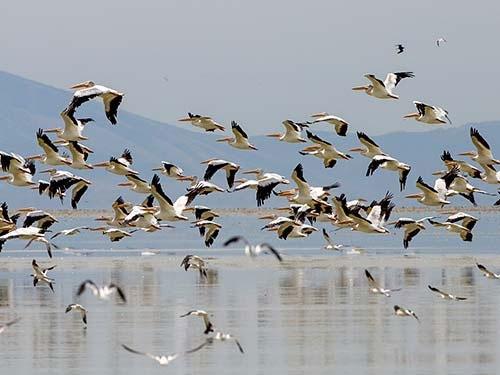 بیش از ۳ میلیون پرنده مهاجر سالانه وارد کشور میشوند