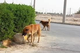 نگرانی از حضور سگهای ولگرد در جمعیت شهری