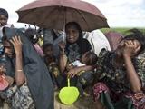 عکس روز: آوارگان گریان