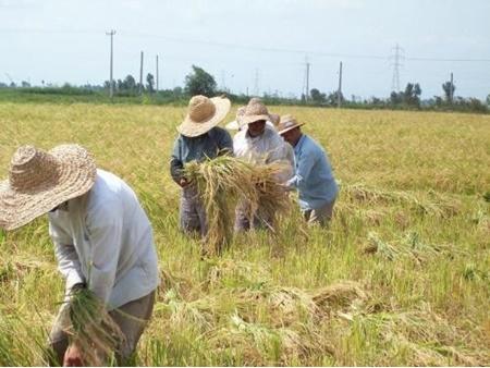 امنیت غذا وابسته به کشاورزان است