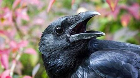 پرندگان,محیط زیست جهان,حیوانات