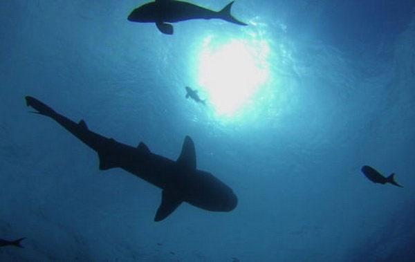 نفوذ آلودگی پلاستیکی به عمیقترین نقاط اقیانوسها