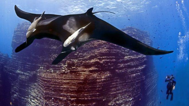 ایجاد پارک ملی محافظت شده دریایی در مکزیک