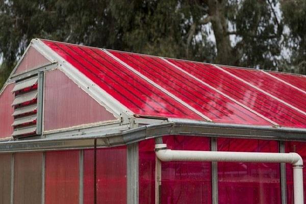 رشد بهتر گیاهان گلخانهای با صفحات خورشیدی