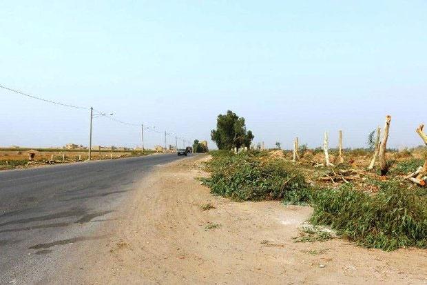 درختان شوش در روزهای خاکی قطع شدند