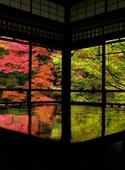 عکس روز: رنگهای پاییزی