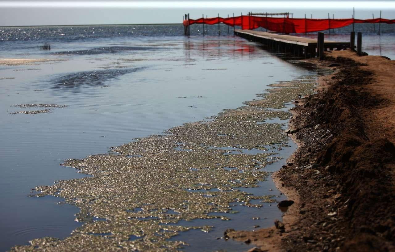 پدر علم کویرشناسی ایران نسبت به خشک شدن دریای خزر هشدار داد