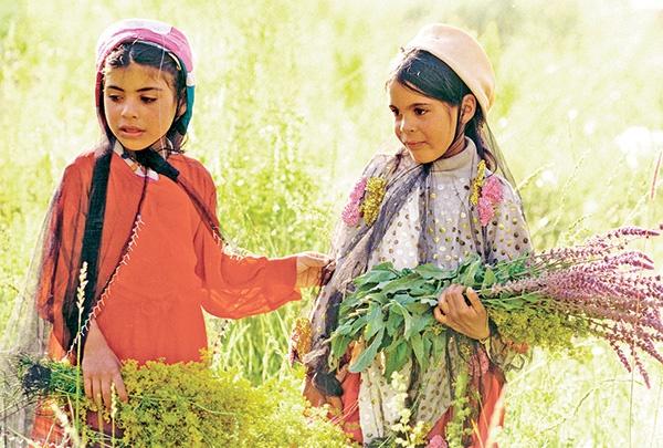 گیاهان دارویی شفابخش و درآمد زا
