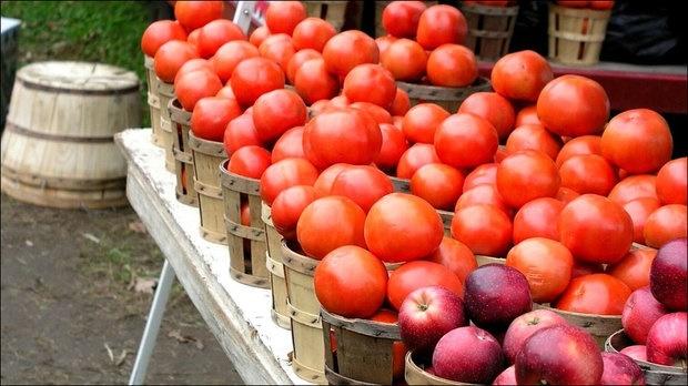 خوردن سیب و گوجه فرنگی آسیب ریوی را بهبود میبخشد
