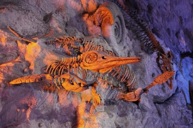 کشف خزنده ۱۵۰ میلیون ساله گوشتخوار در قطب جنوب