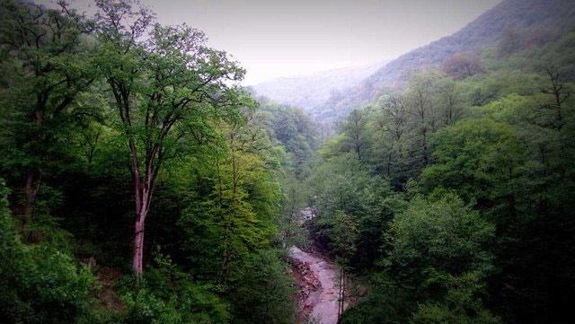 طرحهای جنگلداری به نابودی جنگلها منجر شده است