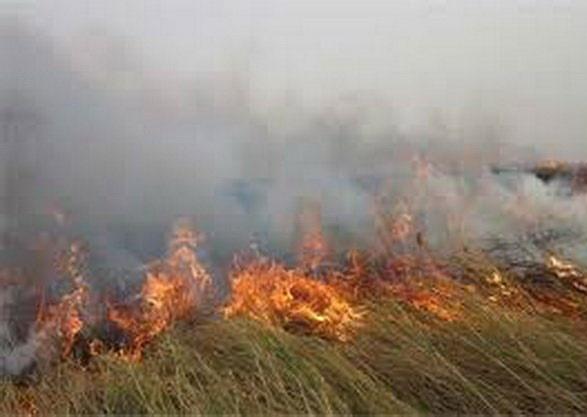 آتش هامون مهار شد