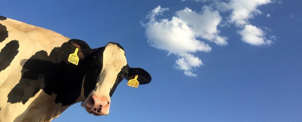 تویوتا از کود گاوی انرژی پاک تولید میکند