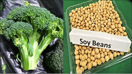 آمریکا,تغذیه,یائسگی,سبزی,سرطان سینه,سویا,سبزیجات کلمی,بروکلی