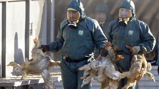 هشدار کارشناسان درباره خطر همهگیری جهانی آنفلوآنزای پرندگان