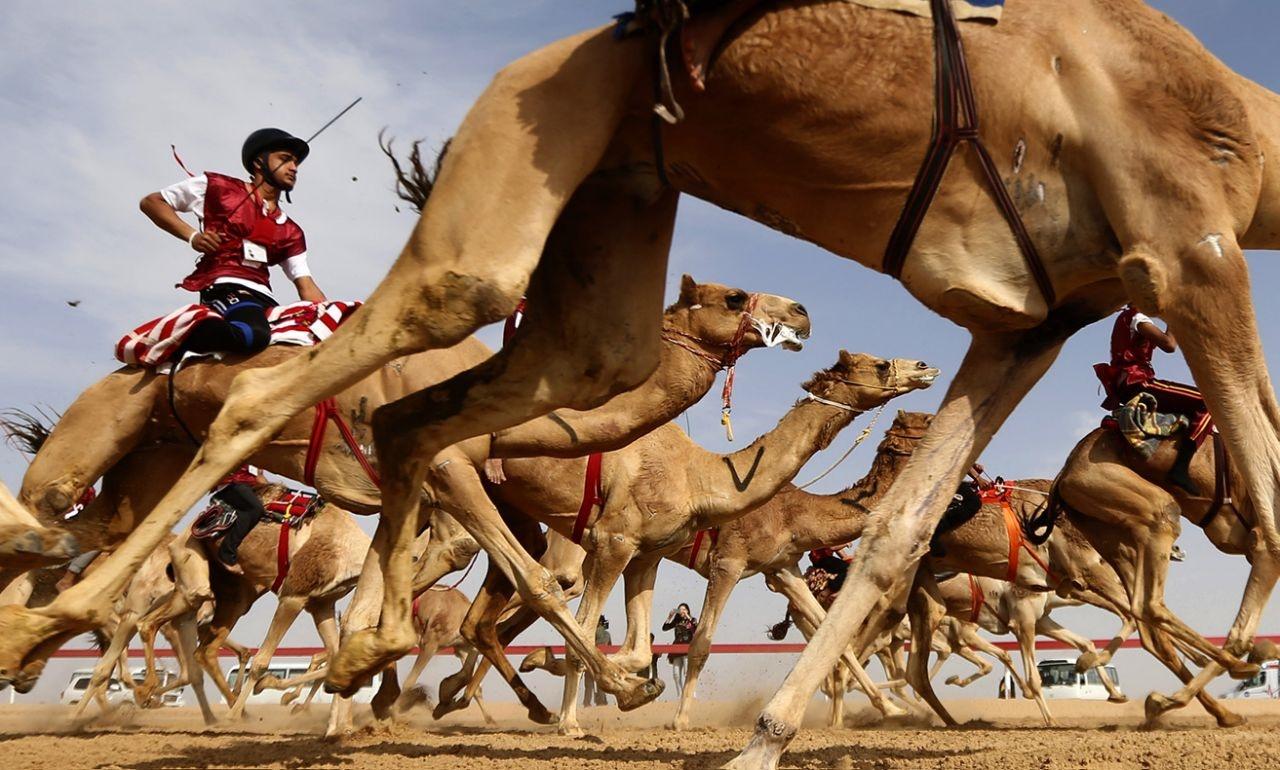 عکس روز: مسابقه شترسواری