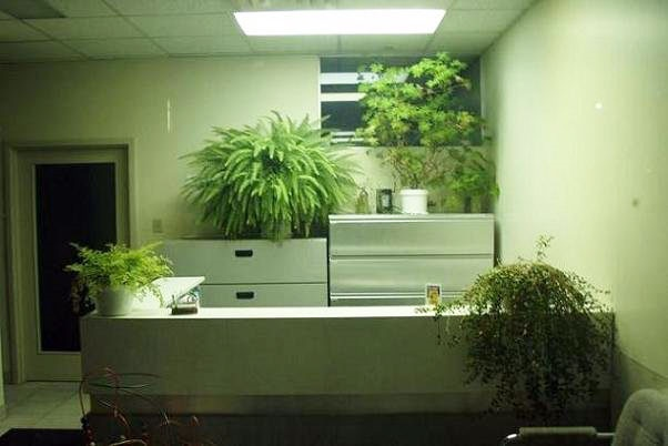 بهبود کیفیت تنفسی محل کار با گیاهان آپارتمانی