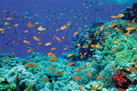پیشبینی آیندهای تاریک برای عمق اقیانوسها