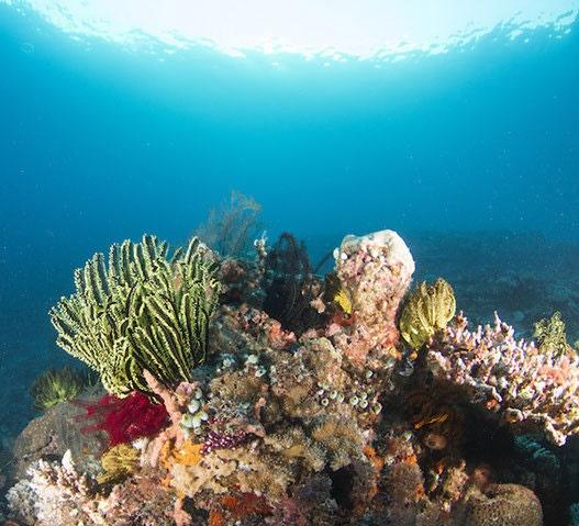 هشدار محققان نسبت به خطر از بین رفتن صخرههای مرجانی در جهان
