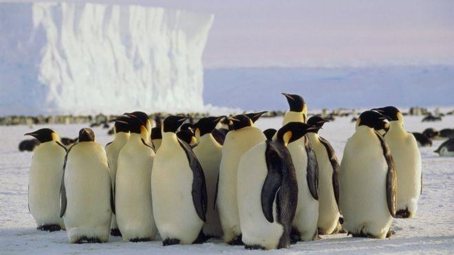 الهام از پنگوئنهای گرسنه برای ایمنی خودروهای هوشمند