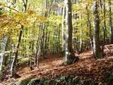 خشکسالی خطری جدی برای جنگلهای جهان
