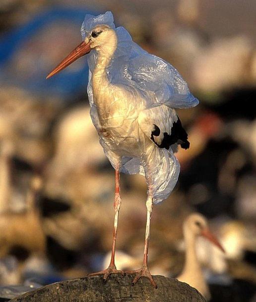 ساخت پلیمری برای بازیافت پلاستیک